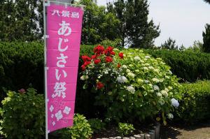 横浜八景島「あじさい祭」