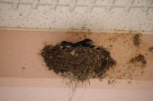 巣が狭くなっている感じ