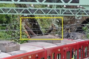 大きな木が崩れ電車の上部に