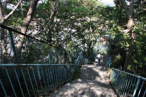 六浦南小学校の脇に階段があります