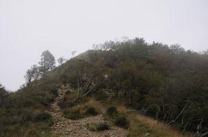 山頂が見えてきました
