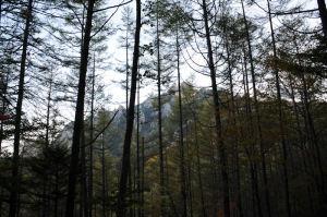 木々の間から瑞牆山が