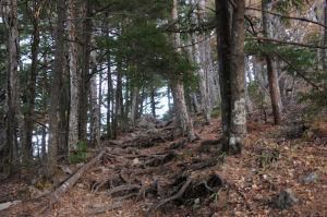 木の根の出ている道を登って