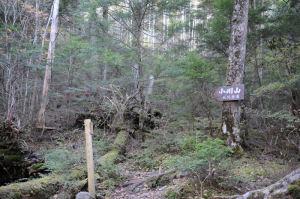 小川山への登山道が