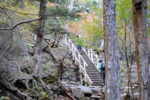 木の階段がみえます
