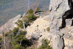 弘法岩の小さく開けた場所
