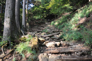 本坂を登ります
