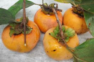 柿が生りました
