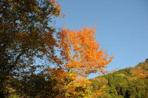 紅葉が青空に映えきれいです