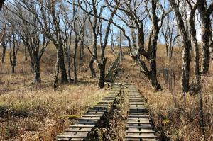 最後の急な木道