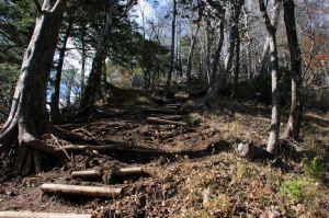 木の根が出た急な下り坂に