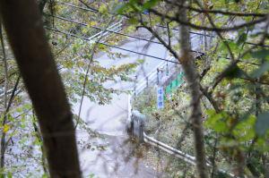 丹沢山塩水橋から登る4