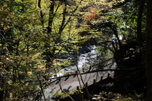 本谷川がみえてきました