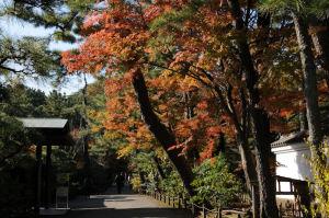 白雲邸前の紅葉