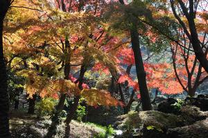 色鮮やかな紅葉が