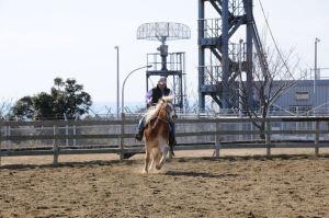 楽しそうに乗馬