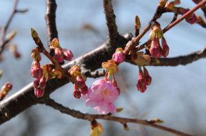 春を思わせる陽気