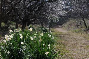 水仙と梅の花