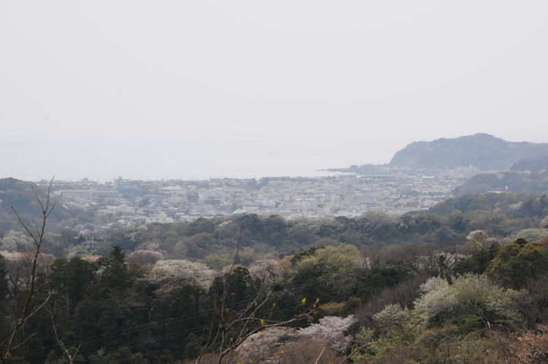 鎌倉市街が一望