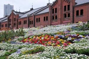 きれいな花がたくさん
