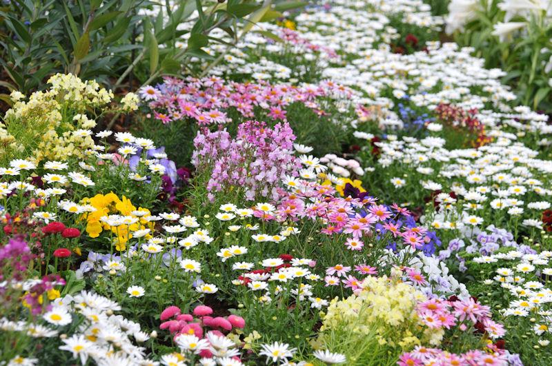 色とりどりの花がさいています