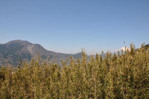 竹藪の向こうにきれいな富士山