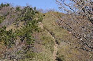 登山道を登れば山頂
