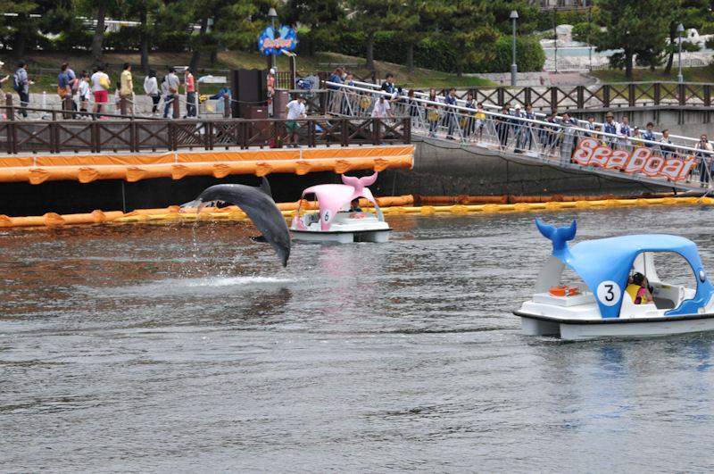 イルカも時々ジャンプしたり