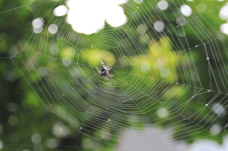 蜘蛛の芸術