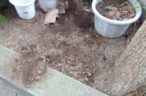 今度は土を掘り返して