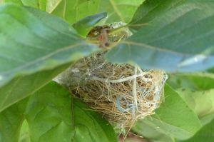 巣ができていました
