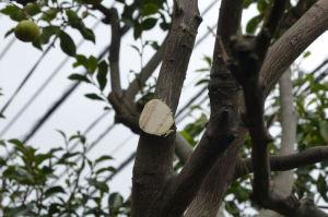枝を切り落としました
