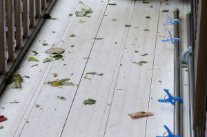 台風26号、強風が残したもの