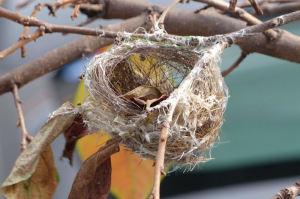 鳥の巣がよくみえています
