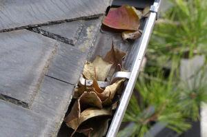 雨樋いにも落ち葉が溜まっています