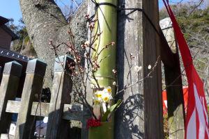 門には梅や水仙が飾られていました