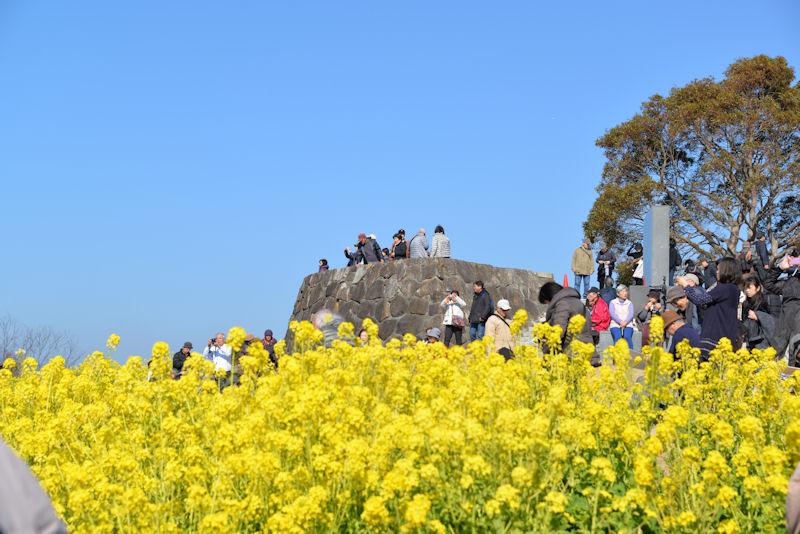 神奈川県二宮・吾妻山公園-3