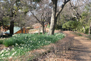途中水仙も咲いていました