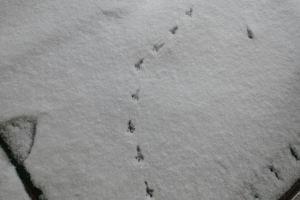 鳥の足跡が点々と