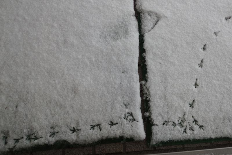 足跡は入口の引き戸前まで