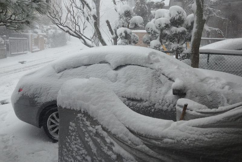 車の屋根には10cm以上積もって