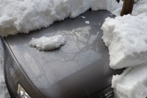 フードに積もった雪は