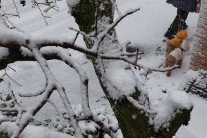 雪の中かわいそうが気がします