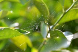 小さな蜘蛛が巣を作り