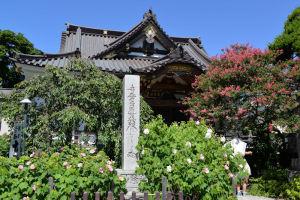 鎌倉・小町 芙蓉の花咲く「妙隆寺」