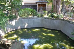 百日水行の池