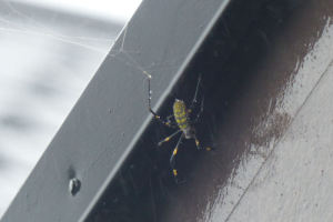 蜘蛛は軒の下に避難