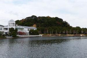 富岡八幡宮のこんもりした社叢林がみえます
