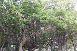 富岡八幡公園には大木がたくさん