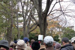 富岡八幡公園北側のけやき並木